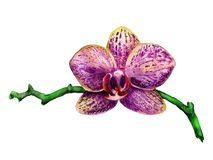 Orchidée de pourpre d'aquarelle Images stock