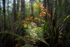 Orchidée de sonnaille photos stock