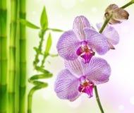 Orchidée et bambou Image libre de droits