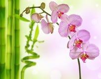 Orchidée et bambou roses Images libres de droits