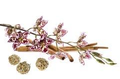 Orchidée et cannelle Photographie stock libre de droits