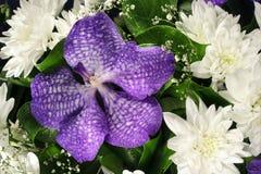 Orchidée et chrysanthèmes Photo stock