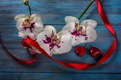Orchidée et coeurs blancs de branche Image stock