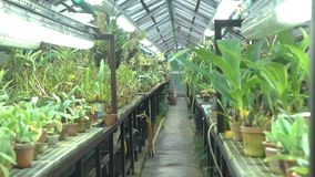Orchidée et d'autres pousses tropicales de fleur en grande serre chaude le bourdonnement 4K a tiré clips vidéos