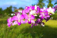Orchidée et fond mou Photographie stock libre de droits