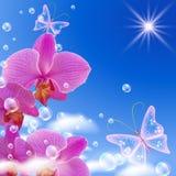 Orchidée et guindineaux Photos libres de droits