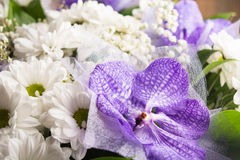 orchidee et marguerite