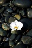 Orchidée et pierre Image stock