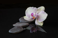 Orchidée et pierres dans l'eau avec la réflexion Photographie stock libre de droits