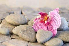 Orchidée et stoneheart Images stock