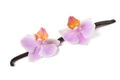 Orchidée et vanille photo libre de droits