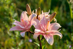 Orchidée exotique Photographie stock libre de droits