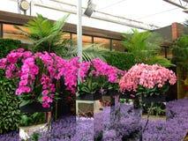 Orchidée, festival de fleur Image libre de droits