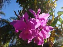 Orchidée - fleurs roses Photos stock