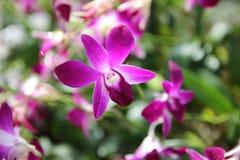 Orchidée fraîche dans la forêt images libres de droits