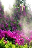 Orchidée gentille avec l'éclat de lumière du soleil par le regain Photos stock