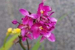 Orchidée lumineuse Image libre de droits