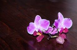 Orchidée magenta sur une surface en bois Photo libre de droits