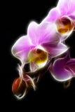 Orchidée miniature Images libres de droits