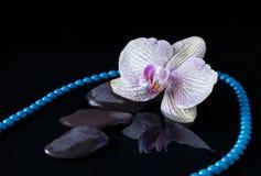 Orchidée, perle et pierres dans l'eau Photos stock