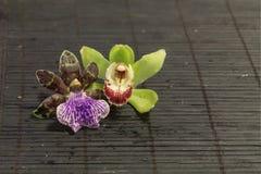 Orchidée pourprée et verte Images stock