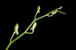 Orchidée pourpre blanche Photos stock