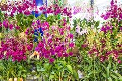 Orchidée pourpre dans des pots de fleur en bois Photographie stock libre de droits