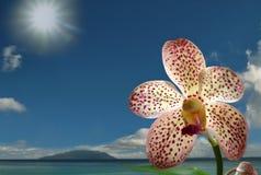 Orchidée rare sur le bord de la mer tropical Photo libre de droits