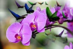 Orchidée rose Photographie stock libre de droits