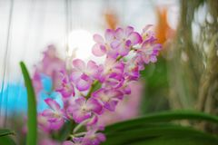 Orchidée rose avec la beauté Photo stock
