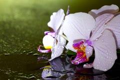 Orchidée rose dans la nuit avec la baisse de l'eau Photo libre de droits