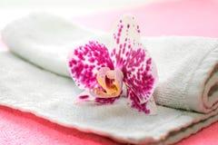 Orchidée rose et blanche Images libres de droits