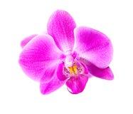 Orchidée rose sur le blanc Image libre de droits