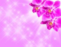 Orchidée rose sur le bleu Photographie stock