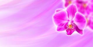 Orchidée rose sur le fond abstrait Images libres de droits