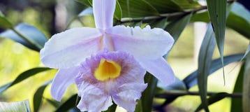 Orchidée rose sur le fond vert de feuille entrelacé Photographie stock libre de droits