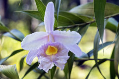 Orchidée rose sur le fond vert de feuille entrelacé Photos stock