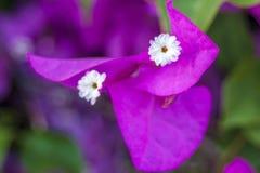 Orchidée rose tendre de phalaenopsis sur le fond brouillé De belles fleurs molles sont vues dans une composition artistique hybri photographie stock libre de droits