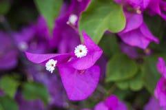 Orchidée rose tendre de phalaenopsis sur le fond brouillé De belles fleurs molles sont vues dans une composition artistique hybri images libres de droits