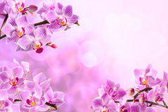 Orchidée rouge Photo stock