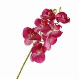 Orchidée rouge simple d'isolement sur le fond blanc images libres de droits