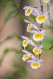 Orchidée sauvage Photos libres de droits