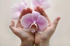 Orchidée sauvage Images libres de droits