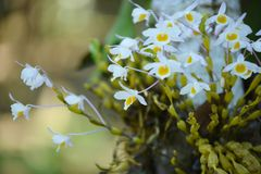Orchidée sauvage rare et magnifique Photographie stock