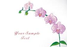 Orchidée stylisée Image stock