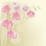 Orchidée stylisée Photos stock