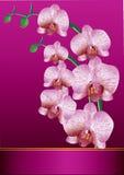 Orchidée stylisée Photo stock