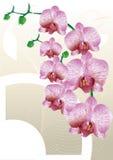 Orchidée stylisée Photographie stock libre de droits