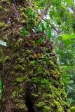 Orchidée sur l'écorce Photographie stock libre de droits