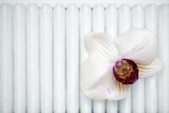 Orchidée sur le filtre Image stock